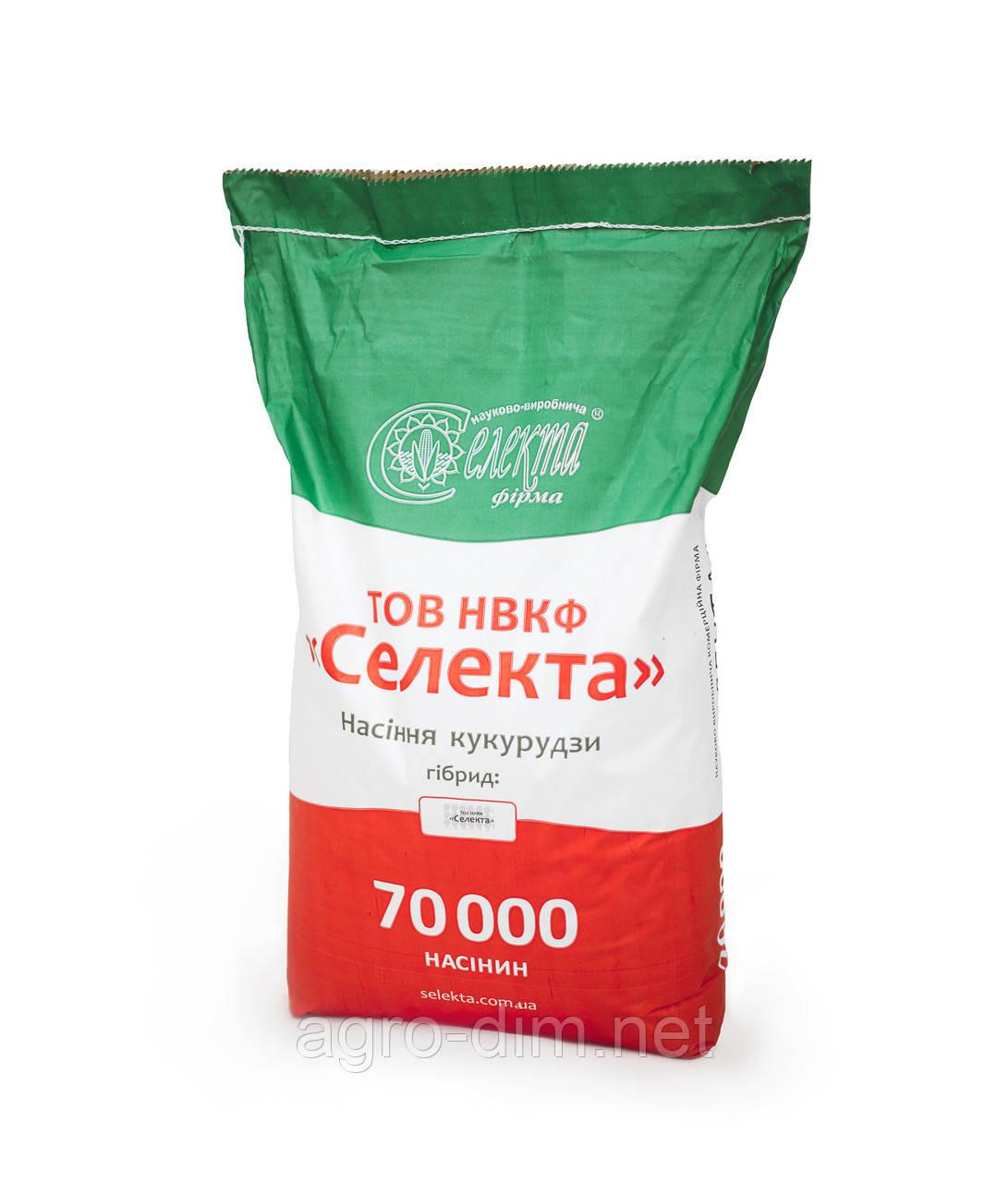 """Семена кукурузы Зернослав ТОВ НВКФ """"Селекта"""""""