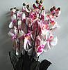 Ветка орхидеи бело-розовая
