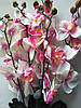 Ветка орхидеи бело-розовая, фото 3
