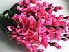 Ветка цветущей яблони розовая, фото 4