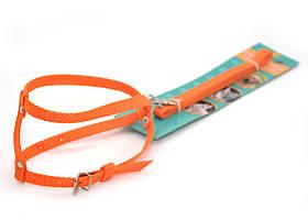 Комплект капроновый КОТ для животных оранжевый