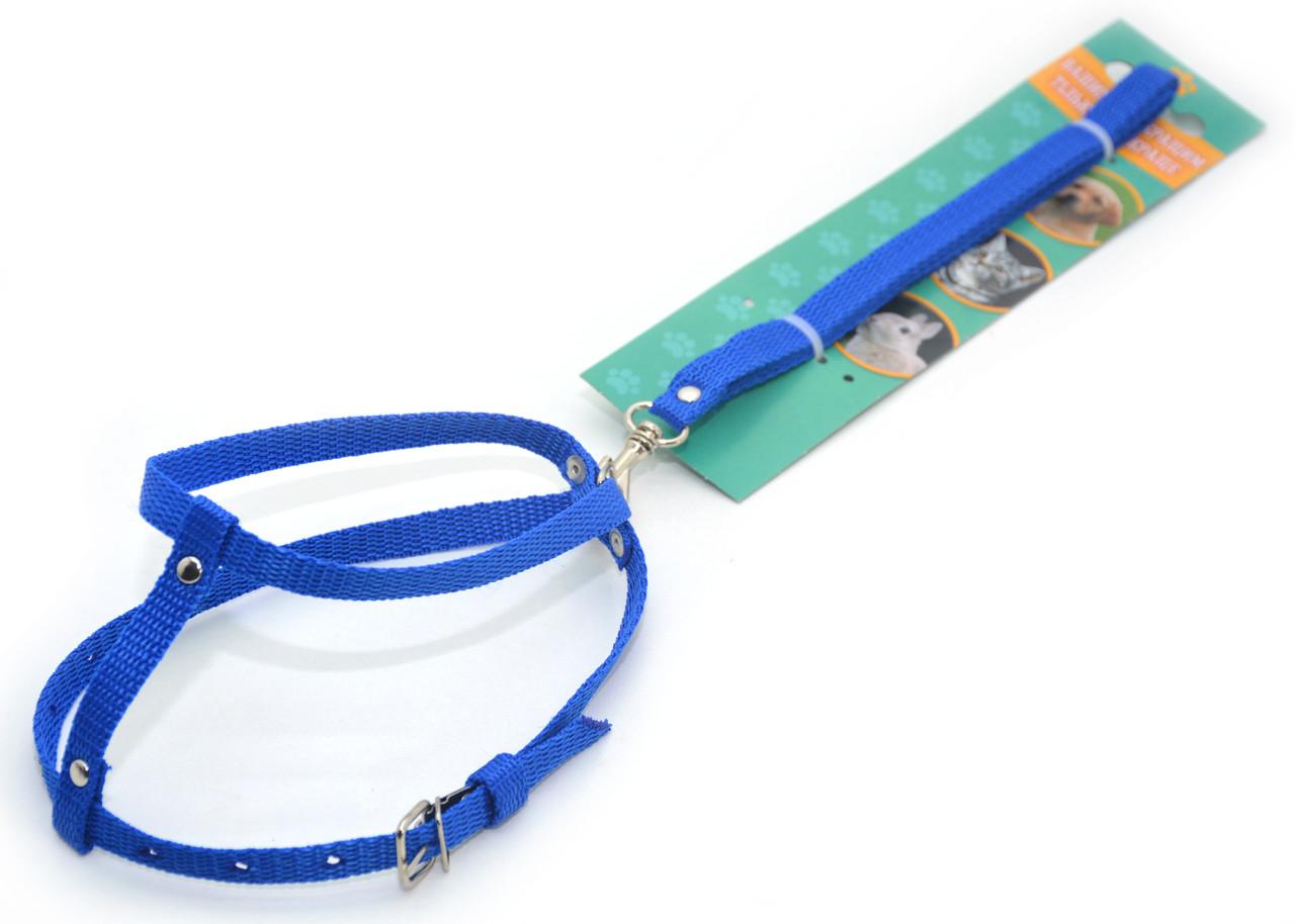 Комплект капроновый КОТ для животных синий