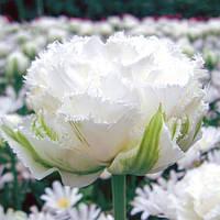 Луковичные растения Тюльпан Snow Crystal | Сноу Кристал 11/12 (махр+бахр)