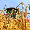 Инновационные технологии в сфере зерноперевозок