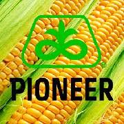 Кукурудза Піонер® | DuPont Pioneer