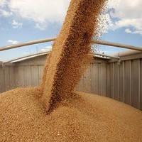 Основные правила перевозки зерна (зерновые, масличные, бобовые, свекла)