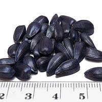 Семена подсолнечника СОЛТАН (Под Гранстар) ЭКСТРА, фото 1