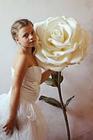 Большие цветы Роза Белая