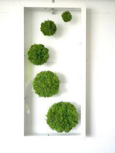 Шары для инсталляции: 5 шаров из стабилизированного мха.