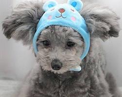 Шапка для собак «Ведмедик», розмір S