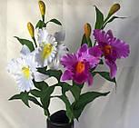 Искусственные орхидеи  Эпидендровые. род каттлея, дактилосталикс., фото 5