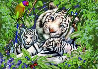 Схема для вышивки бисером Белые тигры КМР 3168