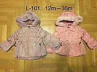 Куртки зимние для девочек оптом, F&D, 12-36 рр