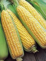 Семена сладкой (сахарной) кукурузы Мореленд F1, 100 тыс. семян