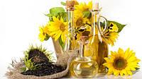 Исследование динамики производства зерновых и масличных культур в Украине