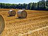 Особенности сбора урожая зерна, подсолнечника, сахарной свеклы