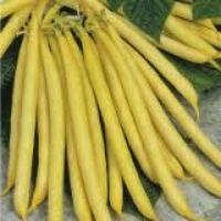 Семена спаржевой фасоли Пенсил Под желтая  10 г