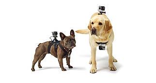 Крепление на собаку для GoPro Fetch (Оригинал)