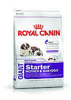 Сухой корм Royal Canin Giant Starter для щенков до 2-х месяцев, беременных и кормящих собак 4 кг