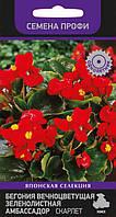 Бегония вечноцветущая бронзоволистная Бада Бум 30шт. цветки крупные, полутень.