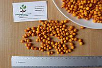 Облепиха (сентябрьская) семена (10 штук) для выращивания саженцев обліпиха насіння на саджанці