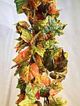 Лиана осенний виноград 14 метров, фото 2