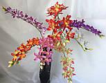 Орхидеи ветка Ангрекоиды   75 см, фото 3