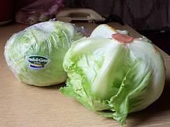 Салат кочанный хрустящий тип Айсберг