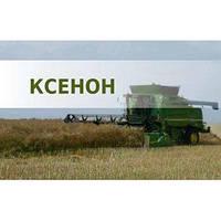 Семена озимого рапса Ксенон Лембке