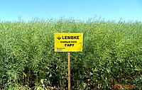 Гару семена оз.рапса Лембке Рапс озимый занимает второе место в структуре посевных площадей масленичных культу