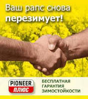 Семена озимого рапса Пионер (Pioneer) PR46W20
