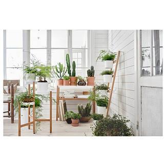 Горшки и растения