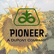 Соняшник Піонер® | DuPont Pioneer