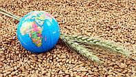 Главные игроки рынка зерновых: экспортеры и импортеры