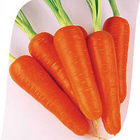 Абако F1 - семена моркови, Seminis - 200 000 семян (> 2.0)
