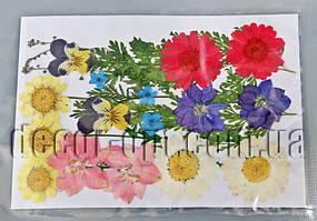 Коллекция креативных натуральных сухих цветов бол.наб.10
