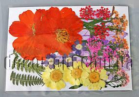 Коллекция креативных натуральных сухих цветов бол.наб.1