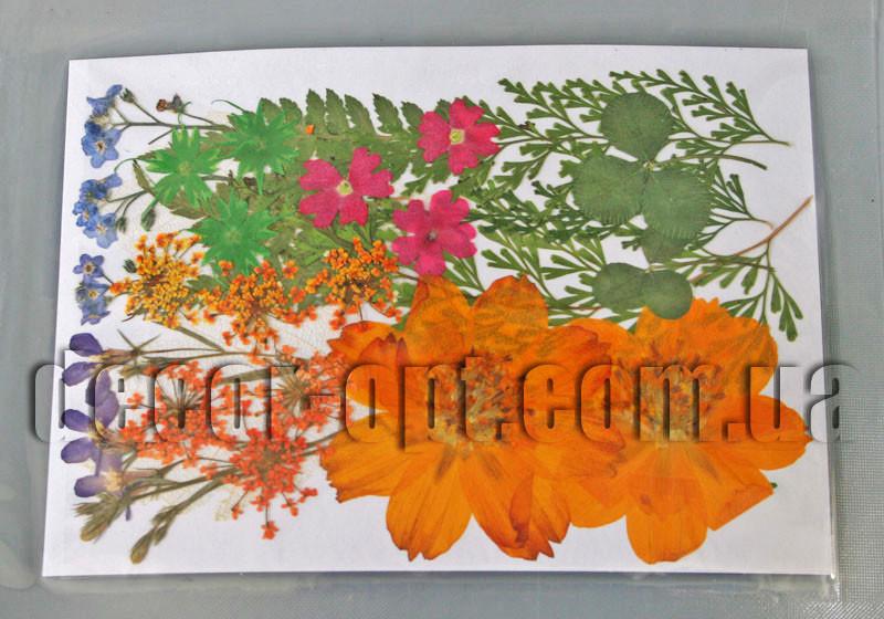 Коллекция креативных натуральных сухих цветов бол.наб.2