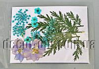 Коллекция креативных натуральных сухих цветов мал.наб.5