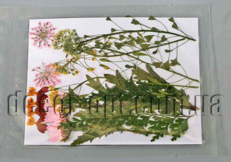 Коллекция креативных натуральных сухих цветов мал.наб.3
