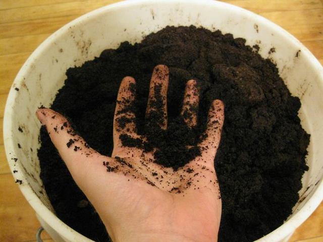 кофейных жмых для удобрения огорода и цветов
