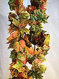 Лиана осенний виноград 14 метров, фото 3