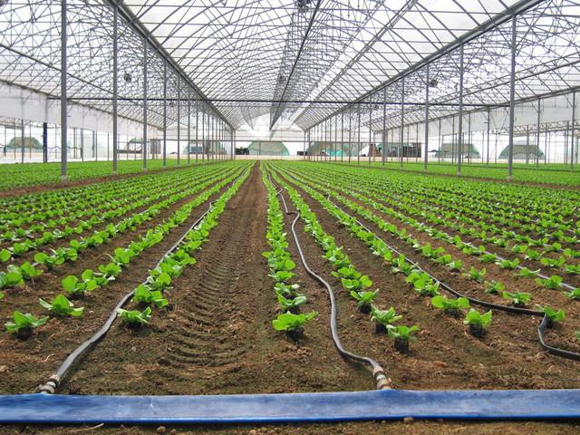 Полив урожая