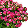 Роза спрей Грация