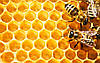 Пчеловодство и поддоны для рассады