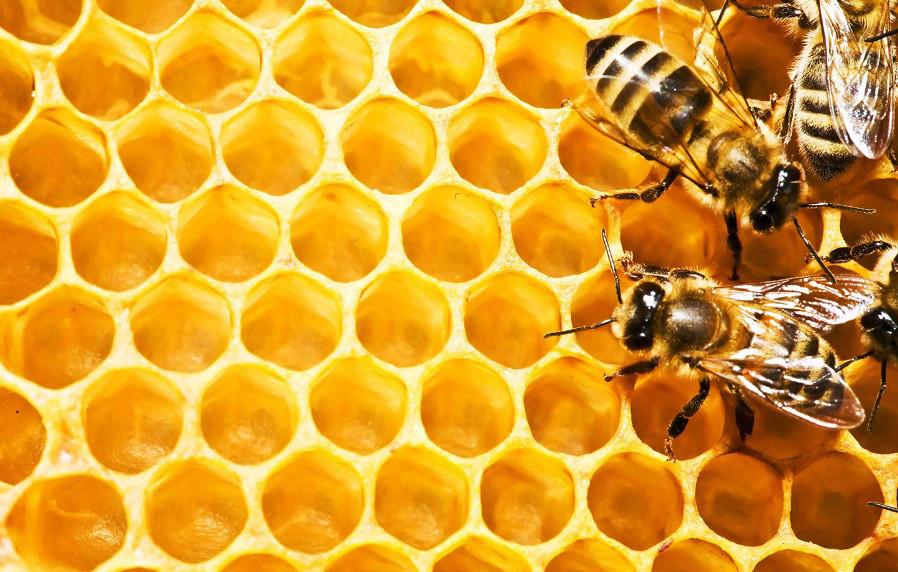 Бджільництво та піддони для розсади