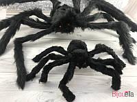 Паук чёрный Н3-8