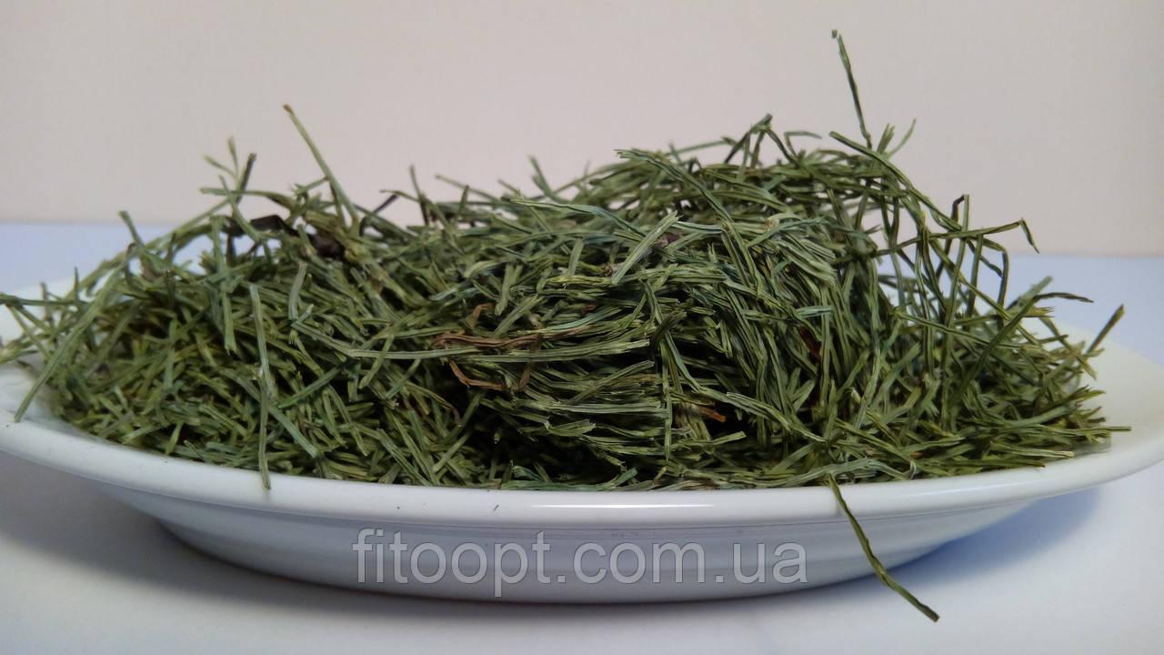 Хвощ полевой (трава) 100 грамм