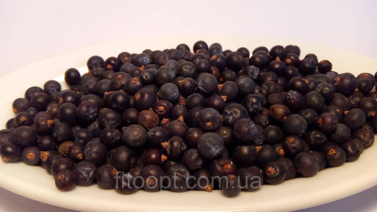 Ягоды можжевельника (ялівця) карпатского съедобного для джина и лечения