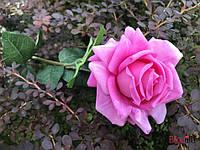 """Искусственный цветок """"Роза"""" лиловый, фото 1"""